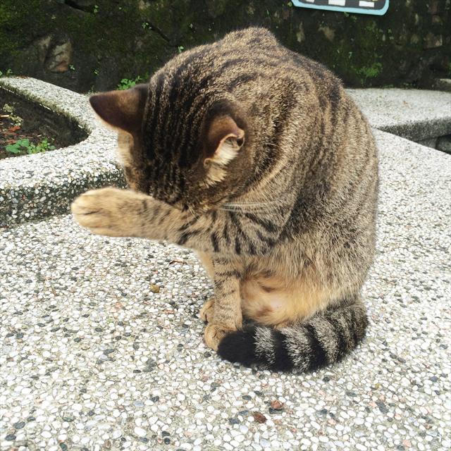 台北猴硐【猫村】5