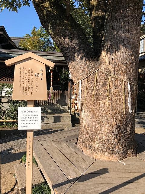 晴明神社の御神木